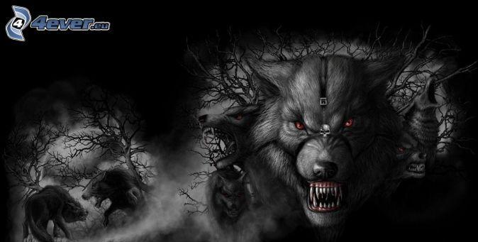loups dessinés