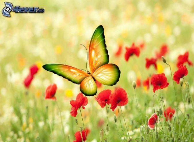 Coquelicot for Immagini farfalle per desktop
