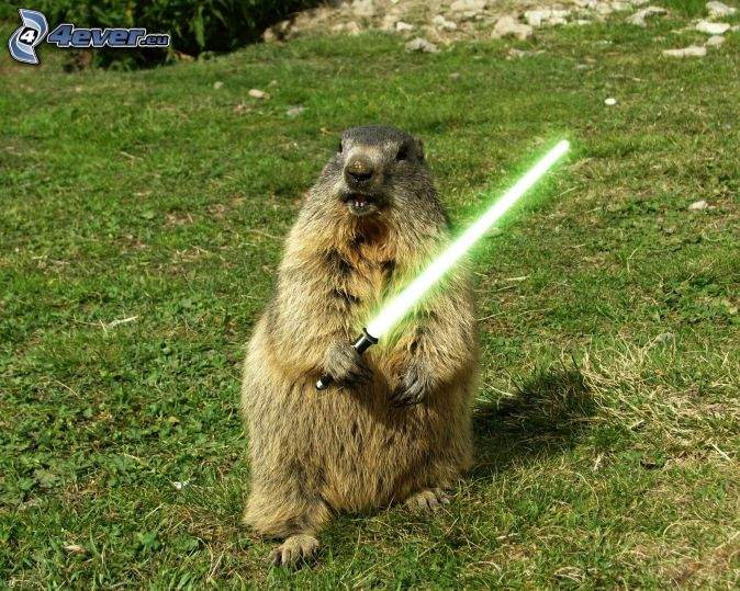 http://4everstatic.com/images/674xX/drole/animaux/marmotte,-sabre-laser,-star-wars,-parodie-162142.jpg