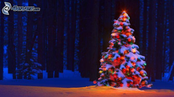 arbre de Noël, forêt, neige
