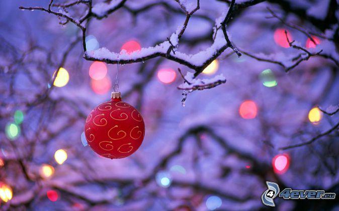 bulle de Noël, lumières colorées, branche enneigée