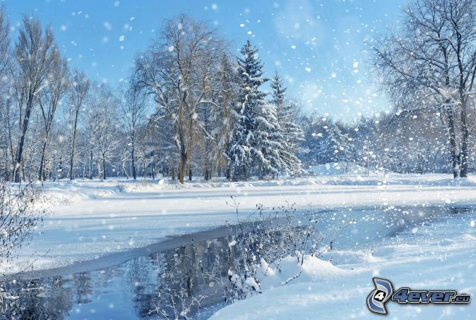 arbres enneigés, chute de neige, rivière