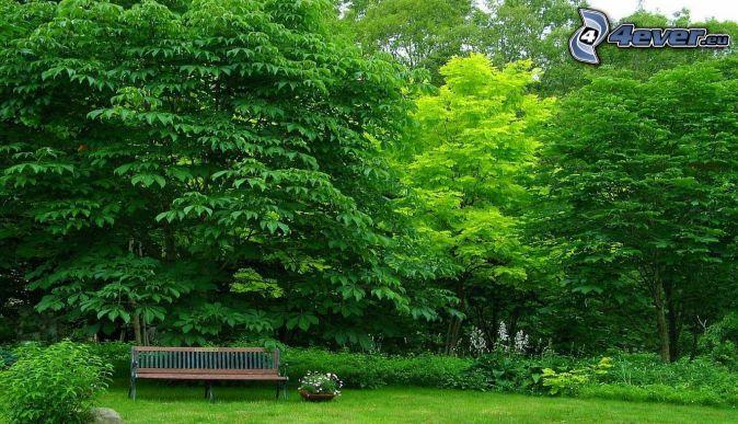 Banc dans le parc - Arbres a feuilles caduques ...