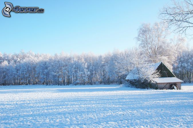 chalet enneigé, prairie enneigée, forêt enneigée