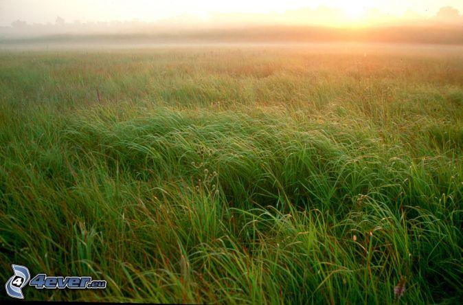 Coucher du soleil dans une prairie for Haute herbe pokemon