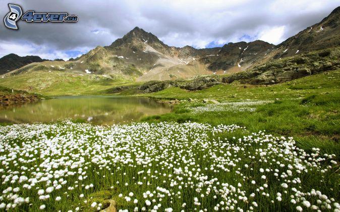 lac fleurs printemps blanches - photo #2
