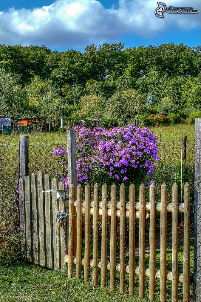 Fleurs violettes buisson palissades jardin arbres for Arbre buisson pour jardin