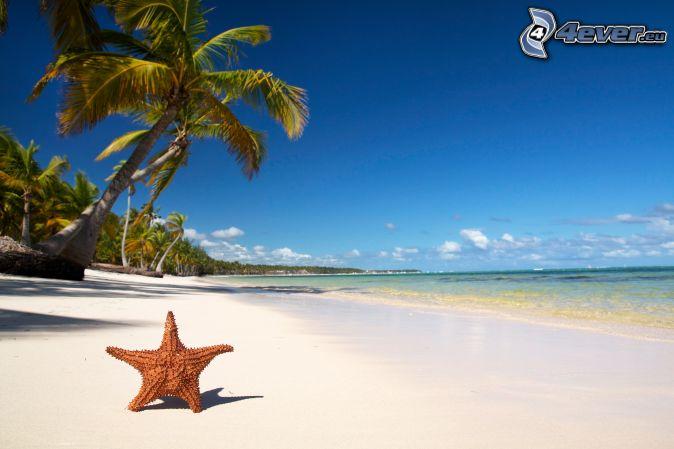 http://4everstatic.com/images/674xX/nature/mer-et-cotes/etoile-de-mer,-plage,-palmiers-200131.jpg