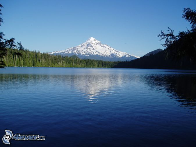 how tall is mount hood