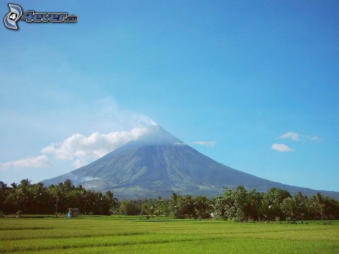 Mount Mayon, forêt, prairie, Philippines