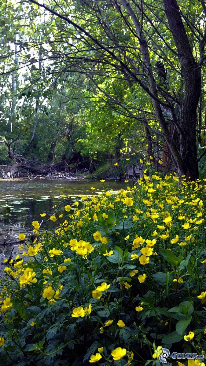 Fleurs - Arbres a feuilles caduques ...