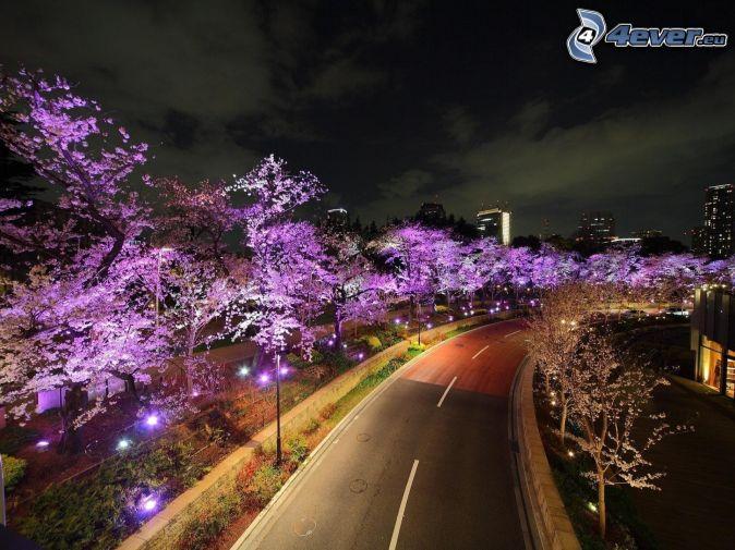 route, arbres violets