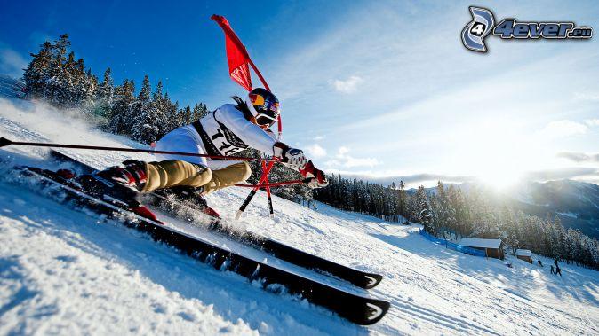 ski extrême, soleil, forêt
