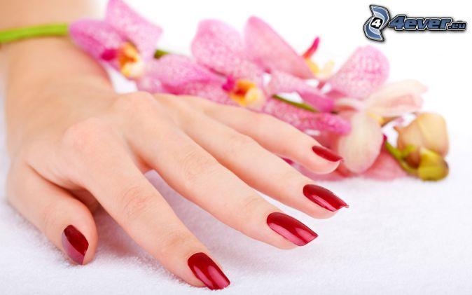 ongles peints, main, Orchidée