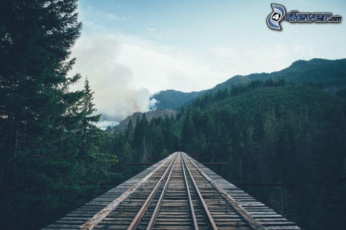 rails, forêt de conifères