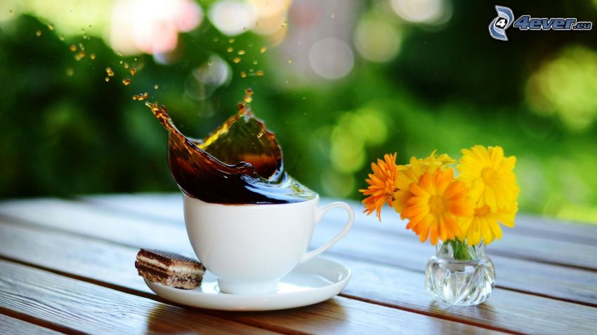 café, clapoter, fleurs jaunes