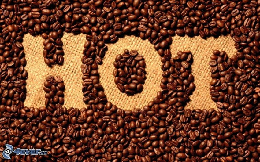 HOT, café en grains