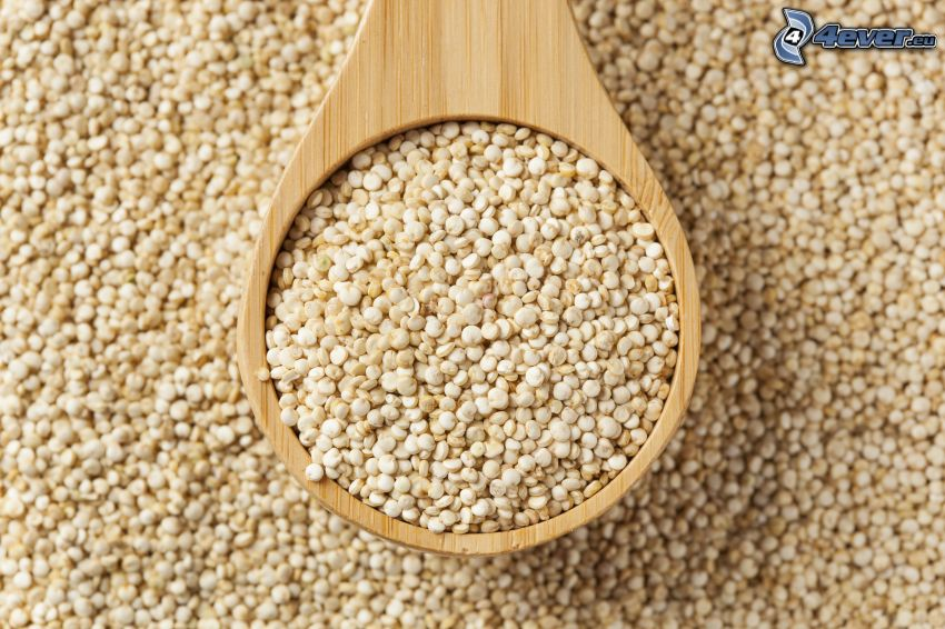 Quinoa, écope