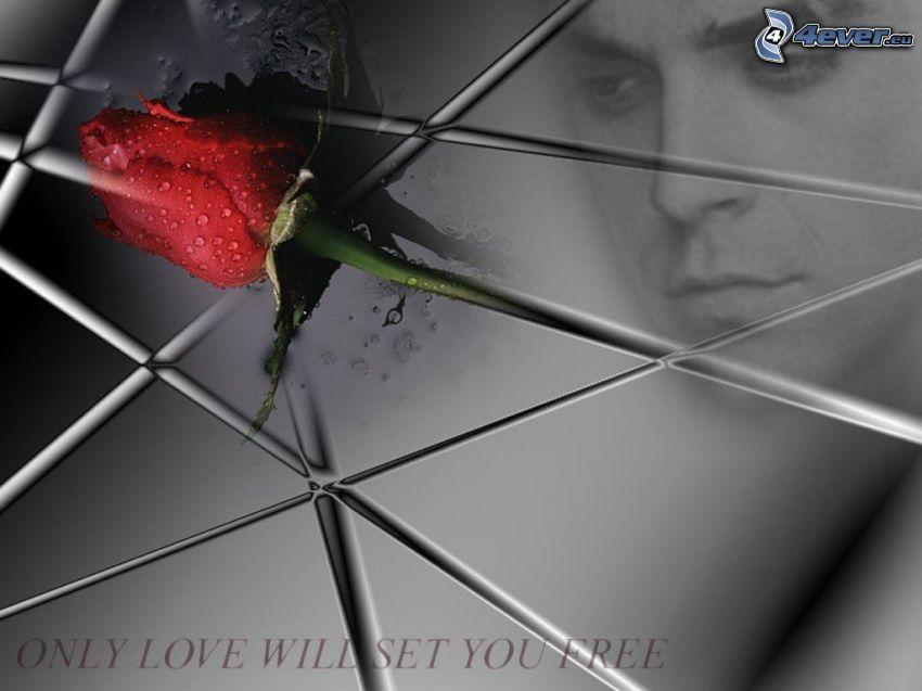 amour, liberté, rose, homme