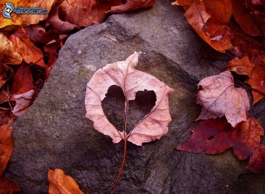 cœur, feuilles sèches, pierre