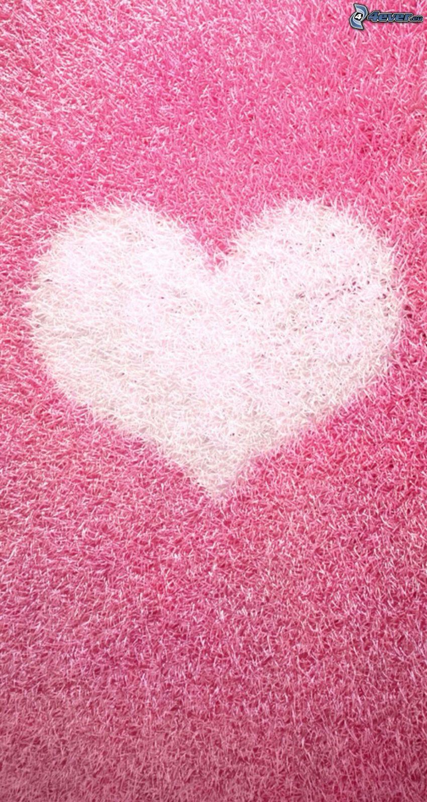 cœur, fond rose