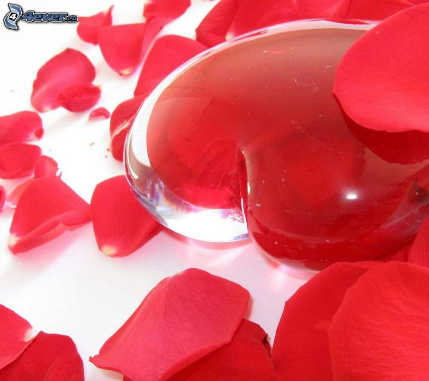 cœur, pétales de roses