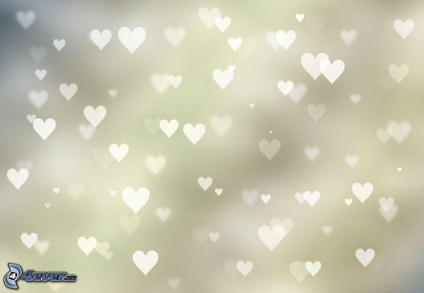 cœurs, fond blanc