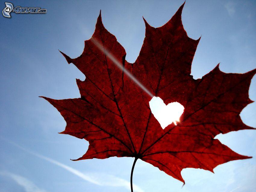 feuille rouge, cœur