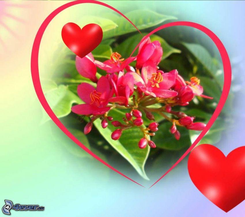 fleurs roses, coeurs rouges