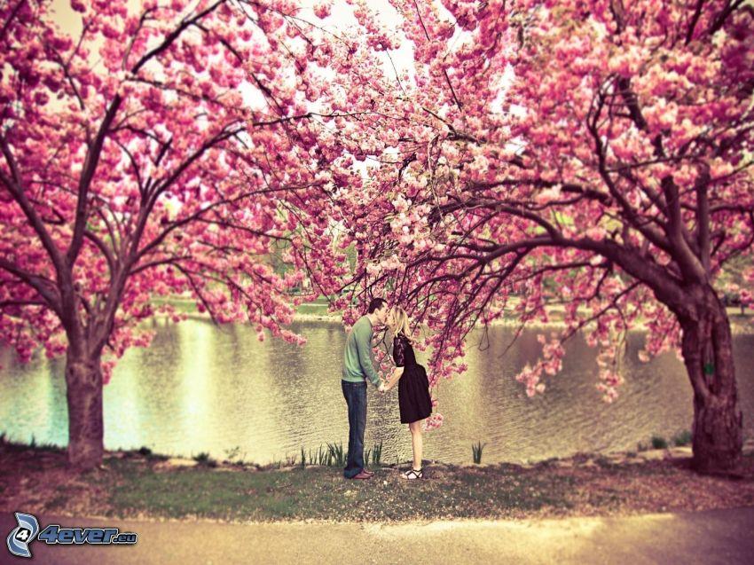 couple dans le parc, fleurs de cerisier, baiser, parc avec étang