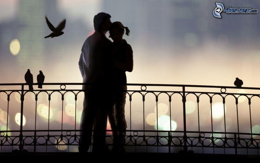 silhouette du couple, étreinte douce, baiser, pigeons, clôture