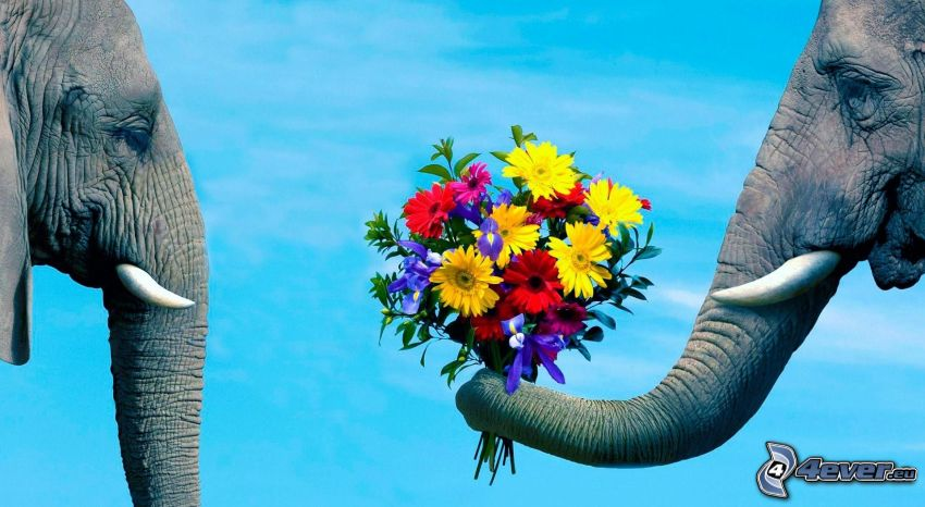 éléphants, bouquet, amour