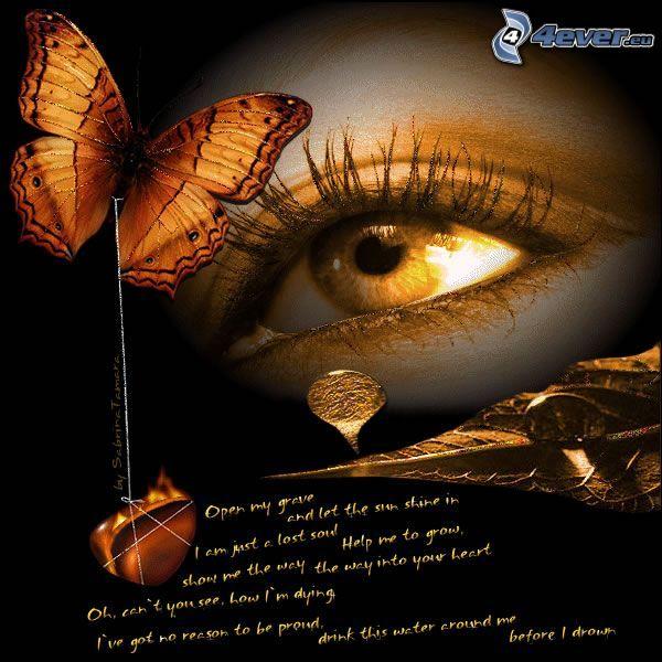 œil, amour, love, papillon