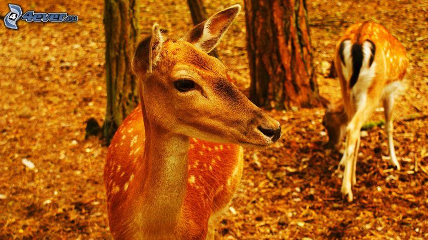 cerfs, forêt