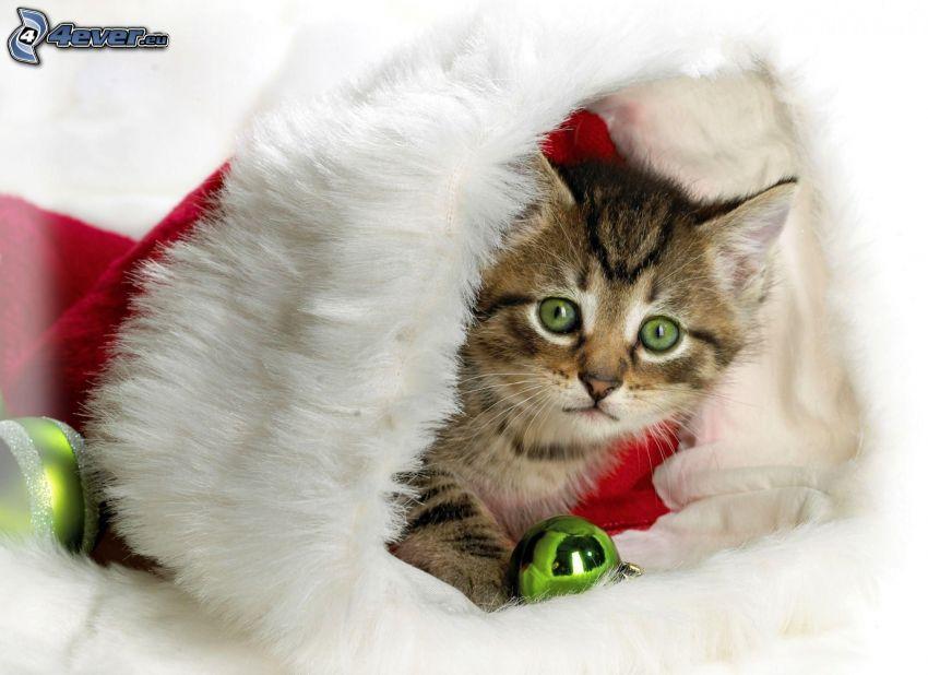 chat, chapeau de Noel, boules de Noël