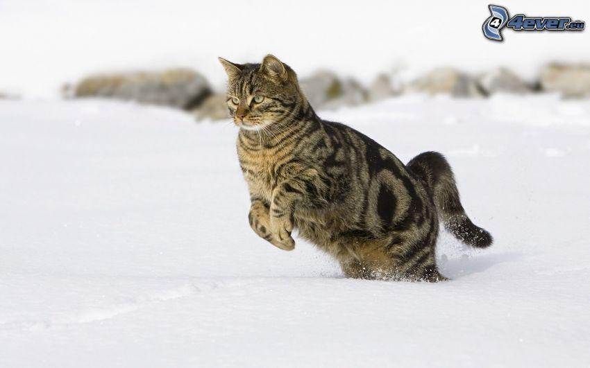 chat, neige, saut