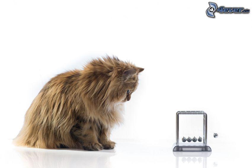 chat, Pendule de Newton