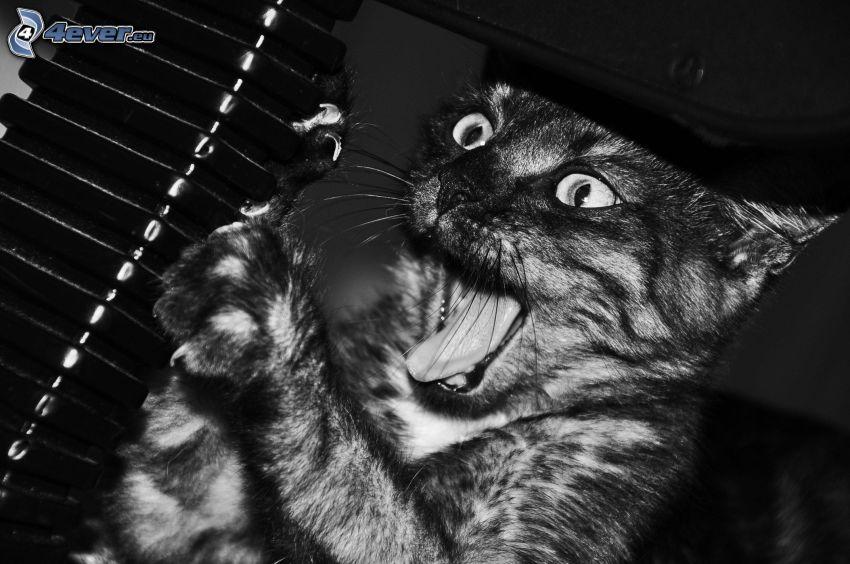 chat, peur, noir et blanc