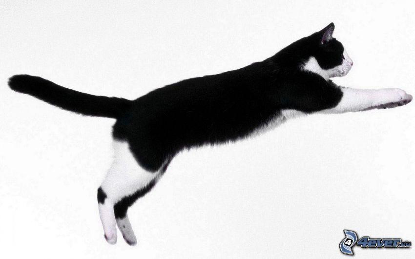 chat, saut
