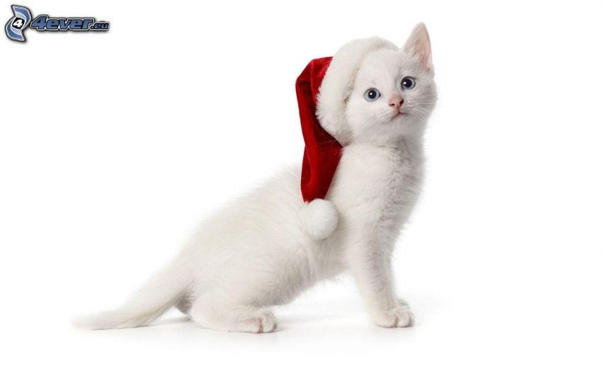 chat blanc, chapeau de Noel