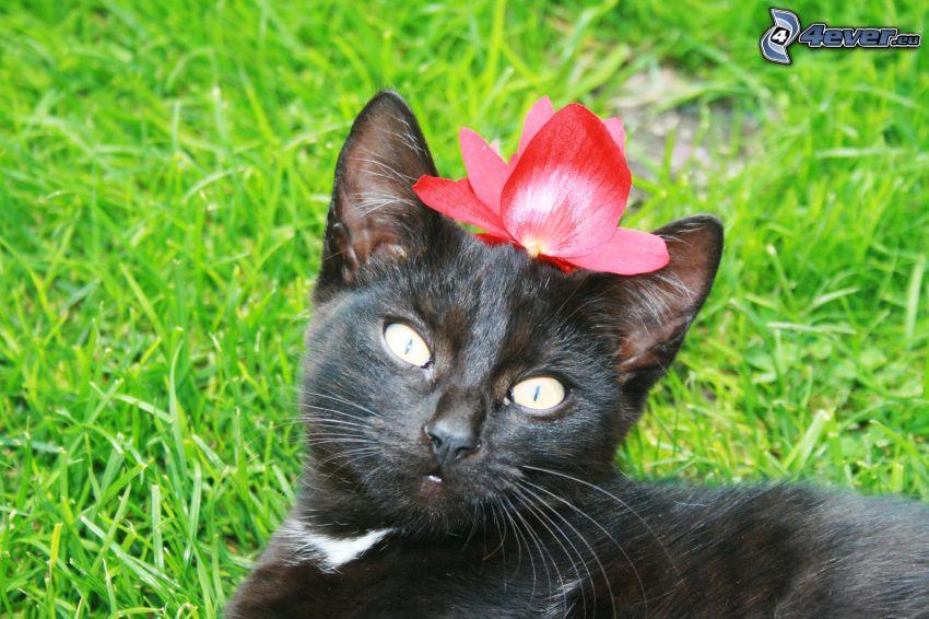 chat noir, chat dans l'herbe, fleur