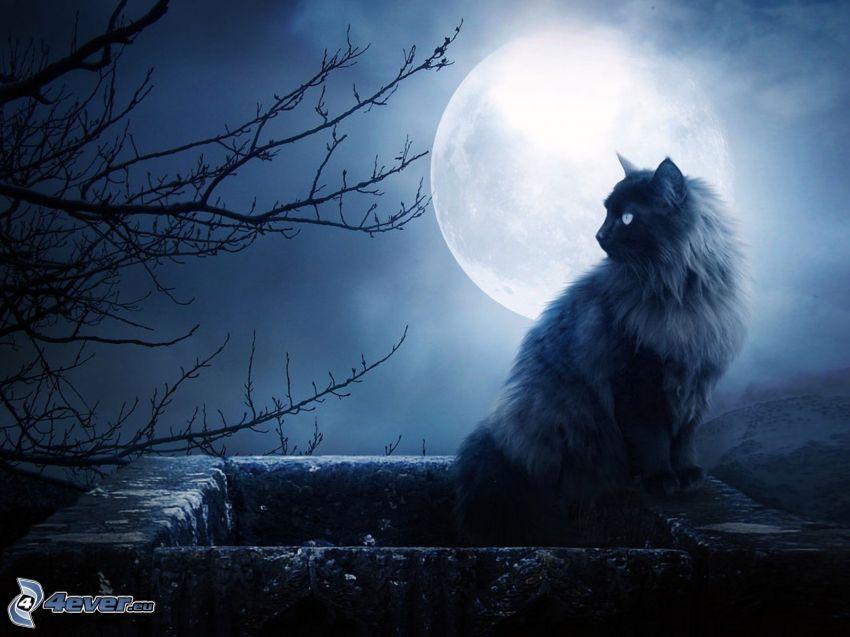 chat sur un mur, silhouette de l'arbre, lune pleine