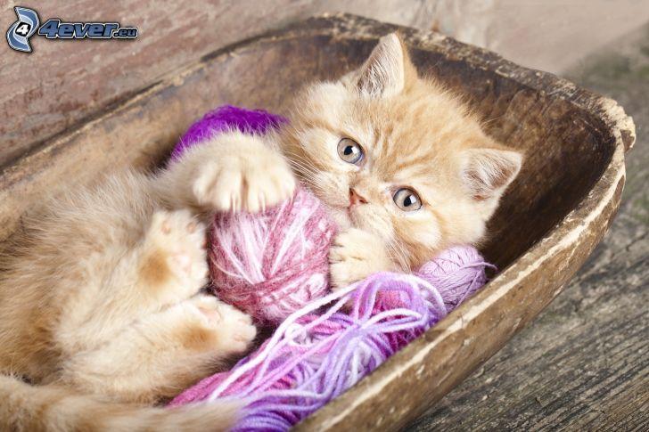 chaton, pelote, laine
