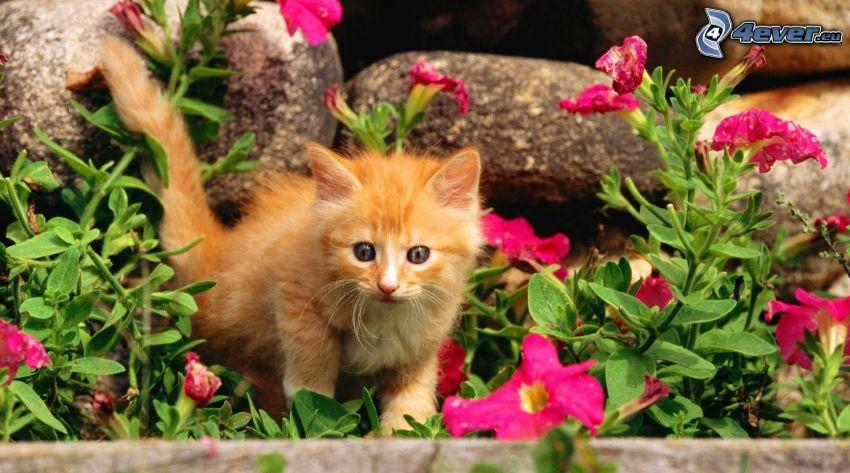 chaton brun, fleurs roses