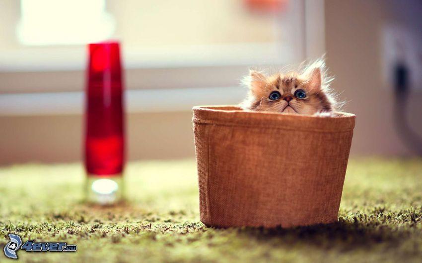 chaton dans un panier, tasse, regard