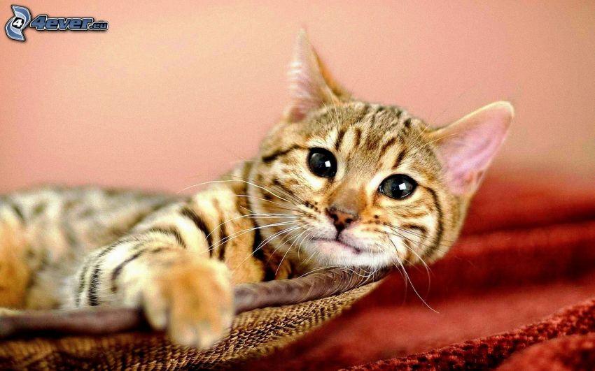 chaton dans un panier
