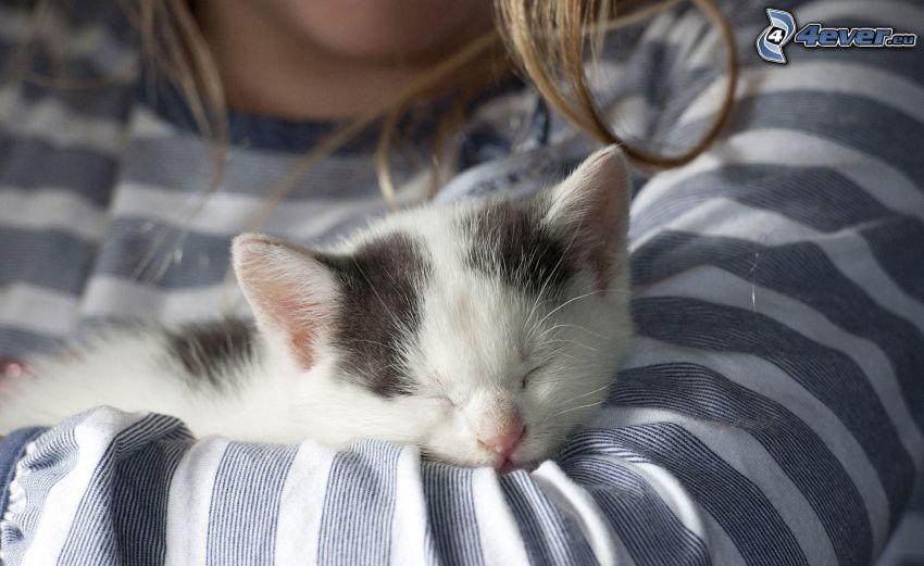 chaton dormant, fille