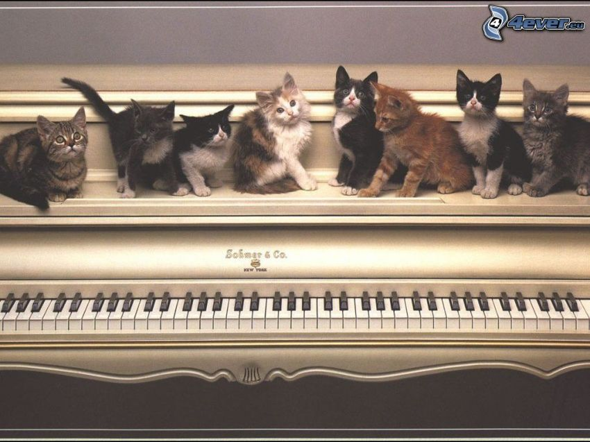 chatons, amour, piano