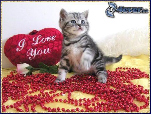 petit chaton, coussin avec coeurs, perles