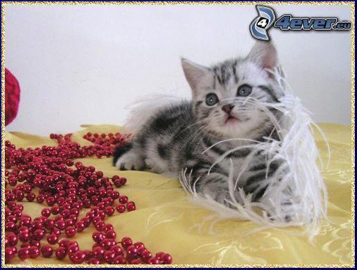 petit chaton, perles